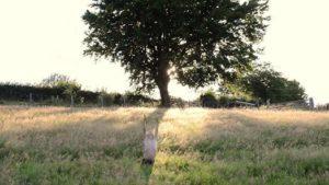 """Lancement officiel de Malonne Transitionne avec la projection du film """"Ici, la Terre"""". @ Henallux Malonne        """