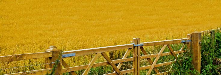 Consultation citoyenne sur l'agriculture en Wallonie: l'avis de membres du réseau de Transition
