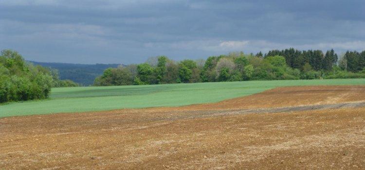 Formation en Agroécologie et Transition
