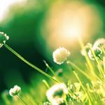 REconomie – Vers une nouvelle économie locale