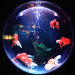 Fishbowl - Bocal - Cercle Excentrique