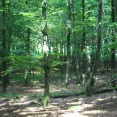 Conférence. Soigner l'esprit, guérir la Terre : à la découverte de l'écopsychologie. 27 octobre à Bruxelles.