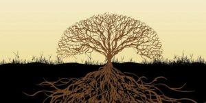 Conférence de Michel Maxime EGGER : Une plante peut-elle pousser sous une pierre?
