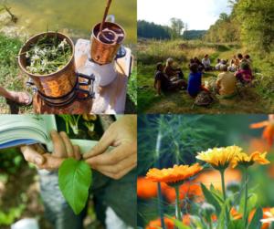 Au cœur des plantes sauvages comestibles et médicinales @ Louvain-La-Neuve        